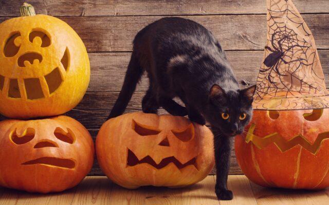 """Котокафе """"Мур-мяу"""" приглашает жителей и гостей города на Хэллоуин"""