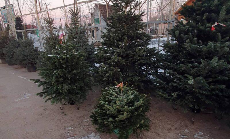 Какие новогодние елки в моде на Новый 2022 год? - Elki1.ru